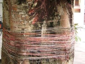 Tree at Swami Dayananda Ashram, Rishikesh